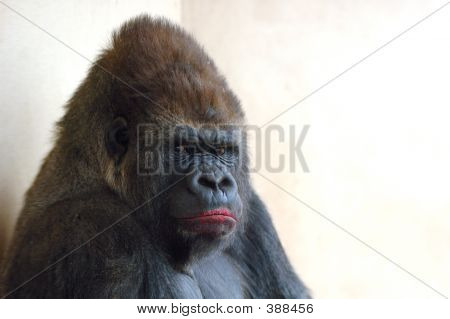 Gorilla With Lipstick