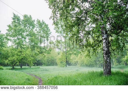 Scenic Landscape With Nice Tree In Summer Forest In Light Haze. Misty Green Scenery With Beautiful B