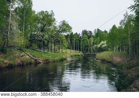 Green River Flows In Forest Among Contrasts Of Trees And Plants. Atmospheric Landscape With Forest R