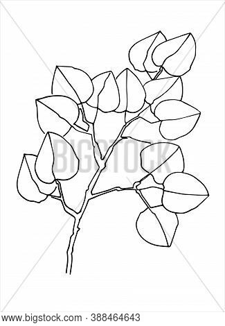 Lime Tree Branch Line Art. Realistic Hand Drawn Vector Illustration Of Lime Tree, Or Linden. Isolate