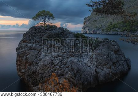 Lone Tree On A Large Rock In Port De Sa Calobra At Blue Hour, With Calm Sea And Colourful Sky, Near