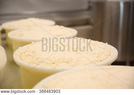 Moulds With Pressed Curd At Cheese Factory, Closeup