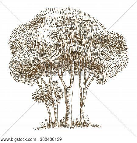 Natural Botany Park Tree Icon. Hand Drawn And Outline Illustration Of Natural Botany Park Tree Vecto