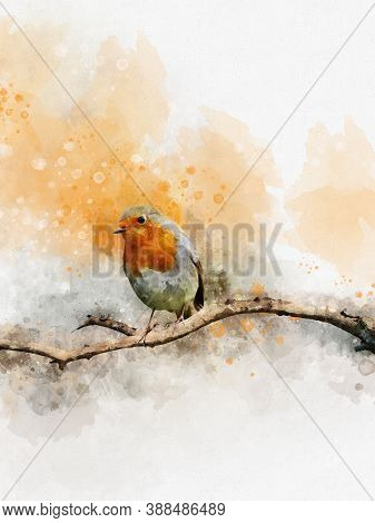 Watercolor Robin Redbreast. Hand Painted Bird Isolated On White Background. Wildlife Illustration Fo