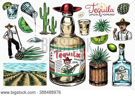 Tequila Bottle, Shot With Lime, Blue Agave Plant, Barrel And Root Ingredient, Farmer And Harvest. En