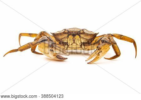 The A Sea ​​crab On A White Background.