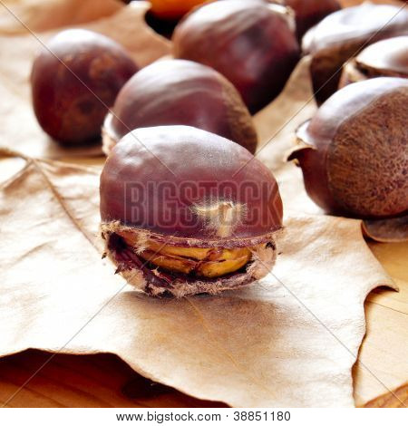 some roasted chestnuts, typical snack in All Saints Day in Spain, on a fall background with dried leaves