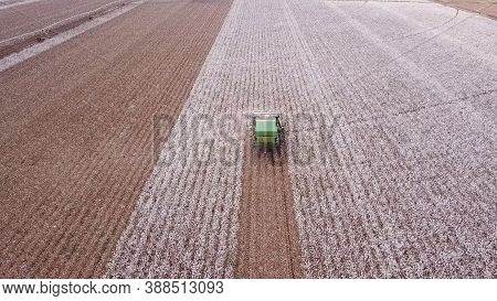 Cotton Picker Working In A Large Cotton Field.