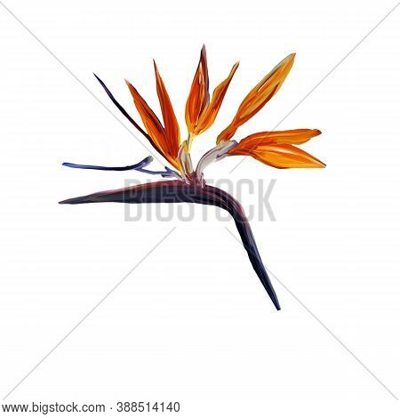 Gouache Painted Bird Of Paradise Isolated On White. Watercolor Illustration With Realistic Branch Of