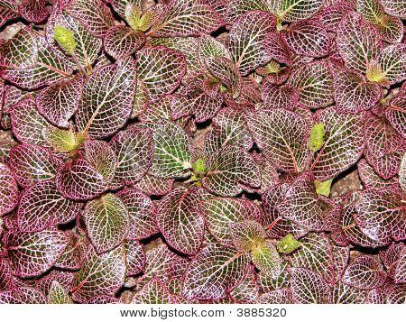 Purple Leaf Background 3