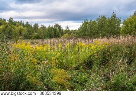 Forest Glade With Yellow Flowers And Tall Dry Grass On An Autumn Day.