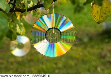 Shiny Cd Disc Suspended From A Tree Branch In The Sunlight.