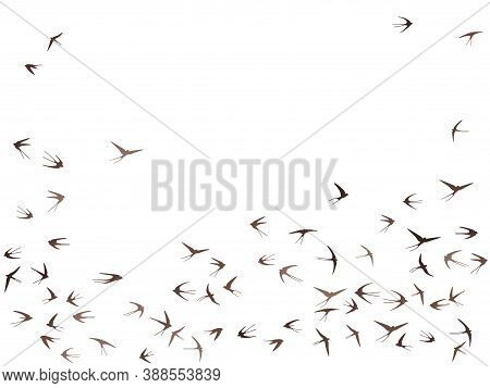 Flying Swallow Birds Silhouettes Vector Illustration. Nomadic Martlets Swarm Isolated On White. Flap