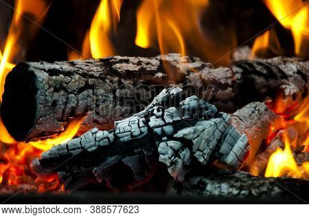 Burning Tree Branches Wooden Logs. Picnic On Camping. Warm Up The Stove. Sparking Balefire With Flam