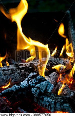 Fire And Firewood Turned Into Coal Ash. Burning Tree Branches Wooden Logs. Picnic On Camping. Warm U