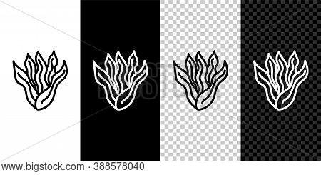 Set Line Seaweed Icon Isolated On Black And White Background. Underwater Seaweed Spirulina, Aquatic