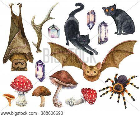 Watercolor Animals. Bat And Black Cat, Tarantula Spider. Amanita Mushrooms, Porcini,  Chanterelle. D