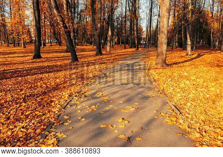 Fall landscape. Fall alley in the city park and fallen leaves covering the ground. Fall sunny park view, fall park alley. Fall background