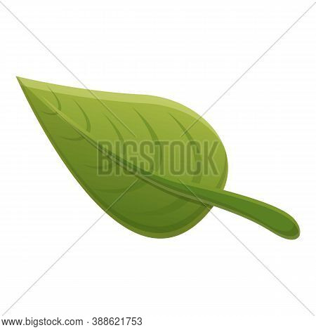 Cinnamon Green Leaf Icon. Cartoon Of Cinnamon Green Leaf Vector Icon For Web Design Isolated On Whit