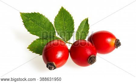 Rosehip Red Berries With Green Leaf Isolated On White Background.
