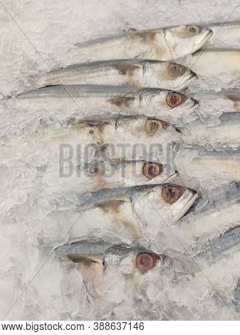 Mackerel On Ice In The Supermarket,fresh Short-bodied Mackerel Preserved On Ice Cubes