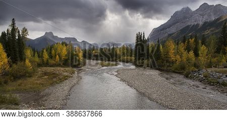 Larch Trees In Fall Colours In The Canadian Rocky Mountains Near Banff Alberta.