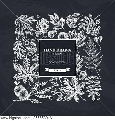 Square Design With Chalk Fern, Dog Rose, Rowan, Ginkgo, Maple, Oak, Horse Chestnut, Chestnut Hawthor