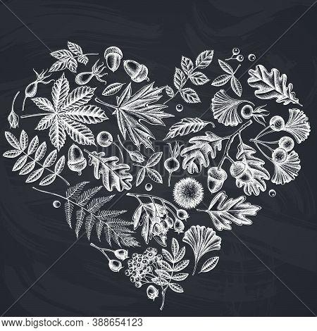 Heart Design With Chalk Fern, Dog Rose, Rowan, Ginkgo, Maple, Oak, Horse Chestnut, Chestnut Hawthorn