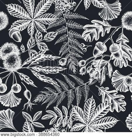 Seamless Pattern With Hand Drawn Chalk Fern, Dog Rose, Rowan, Ginkgo, Maple, Oak, Horse Chestnut, Ch