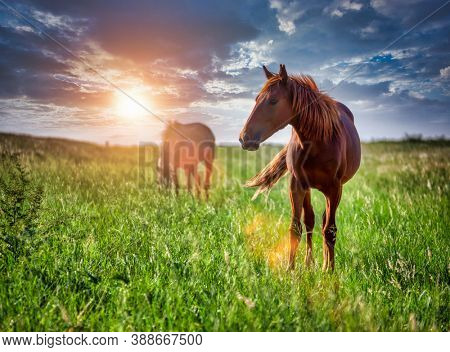 two horses grazing on a meadow in a village near Gaborone in Botswana