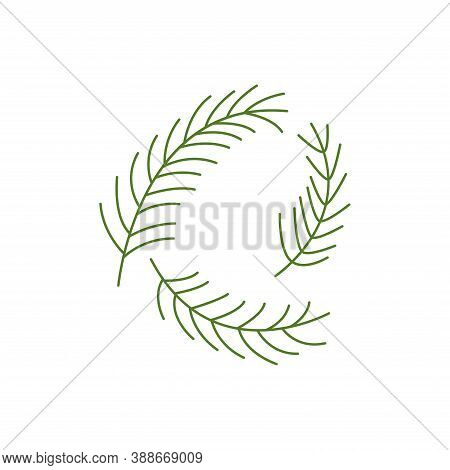 Spruce Twigs. Set Of Three Pine Branches, Evergreen Tree. Line Vector Isolated. Christmas Tree