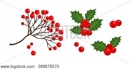 Holly berry and red rowan berry branch icon, vector Christmas symbols, holiday plants isolated on white background, winter nature illustration