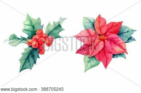 Watercolor Set Isolated On White Background Christmas Illustrations, Flower Poinsettias, Holly, Red