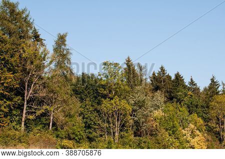 Edge Of A Mixed Forest With Deciduous And Coniferous Trees On A Sunny Day In Autumn