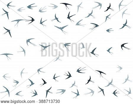 Flying Swallow Birds Silhouettes Vector Illustration. Migratory Martlets Swarm Isolated On White. Wi