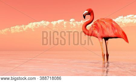 Flamingo Bird. The American Flamingo (phoenicopterus Ruber) Is A Large Species Of Flamingo Also Know