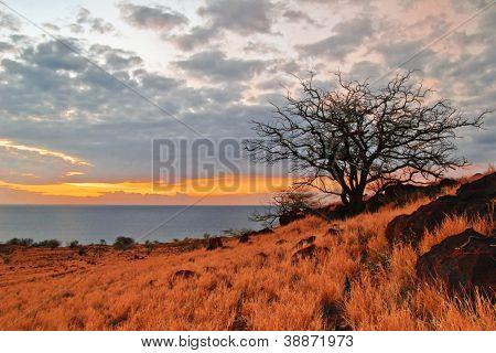 Trees in sunset lights. Photographed on Big Island. Hawaii. USA
