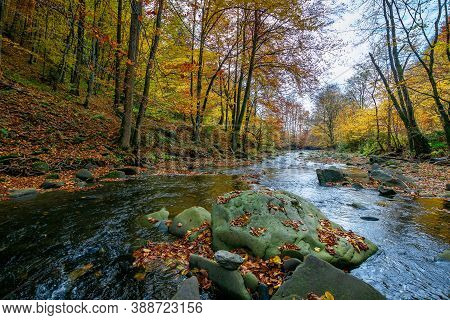 Mountain River In Beech Forest. Beautiful Autumnal Scenery Of Carpathian Woodland. Trees In Fall Col