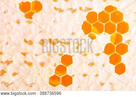 Background Of Golden Sealed Honeycomb Close Up. Apiculture.