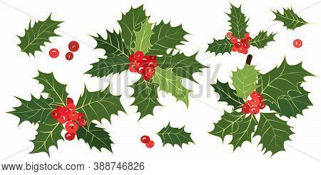 Christmas Holly. Set Of Sprigs, Green Leaves, Red Holly Berries Isolated On White Background. Xmas S
