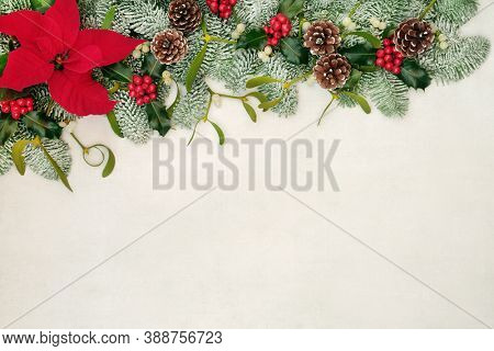 Poinsettia flower border with holly, snow covered spruce fir, mistletoe & pine cones on old parchment paper background. Festive background for Thanksgiving & Christmas. Flat lay, top view, copy space
