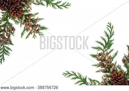 Winter greenery border with cedar cypress leylandii leaves & pine cones on white background. Natural flora for the Christmas & New Year season. Top view, flat lay, copy space.
