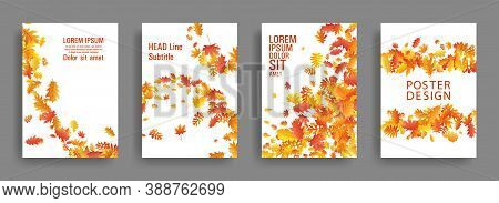 Autumn Leaves Falling Card Backgrounds Or Covers Vector Set. Yellow Orange Red Dry Autumn Leaves Org