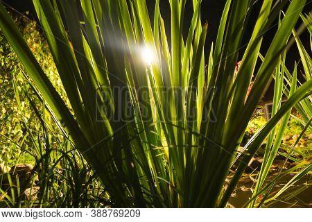 Garden Pond At Night. Illuminated Pond Shore In A Night. Garden Fish Pond. Garden Pond On Natural La