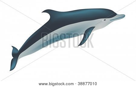 Dolphin vector illustration, isolated on white