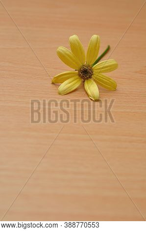 A Single Yellow Daisy On A Wooden Table