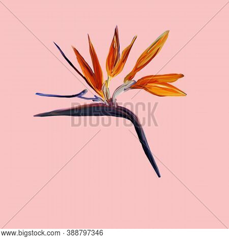 Gouache Painted Bird Of Paradise. Watercolor Illustration With Realistic Branch Of Strelitzia. Bird