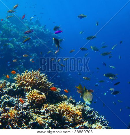 Vivid coral reef full of different creatures