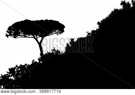 Tree Landscape, One Tree Tilted Isolated On The White Background