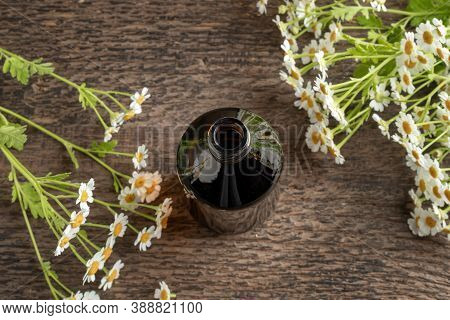 A Dark Bottle Of Herbal Tincture With Blooming Feverfew Plant